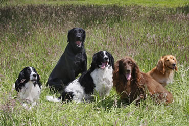 Tawnyhill Boarding Kennels - Tawnyhill stud dogs