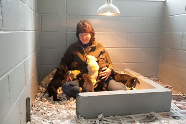 Tawnyhill Boarding Kennels - Dogs for Sale