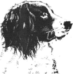 Tawnyhill Gundogs logo